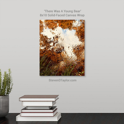 'There Was A Young Bear' solid faced canvas wrap 8x10 on wall - StevenDTaylor.com