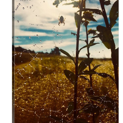 'Arthropod Dawning' solid faced canvas wrap 8x10 front side - StevenDTaylor.com