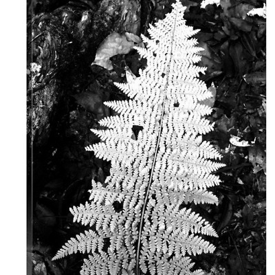 'Love Fern' solid faced canvas wrap 8x10 front side - StevenDTaylor.com