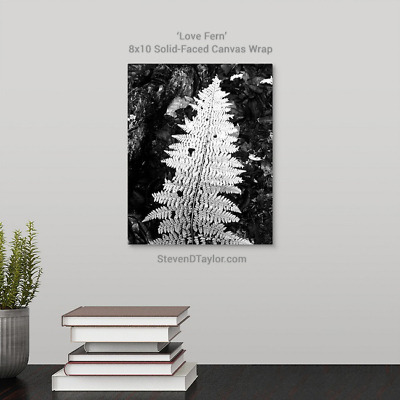 'Love Fern' solid faced canvas wrap 8x10 on wall - StevenDTaylor.com