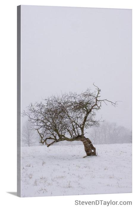 'Disrobed in Winter' solid faced canvas wrap 12x18 front left side - StevenDTaylor.com